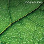 Social_Capital_Joonmo_Son